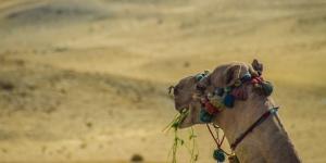 ägypten-1051